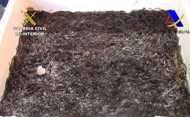 Interceptan en Barajas 310 kilos de angulas... y las liberan en ríos vascos