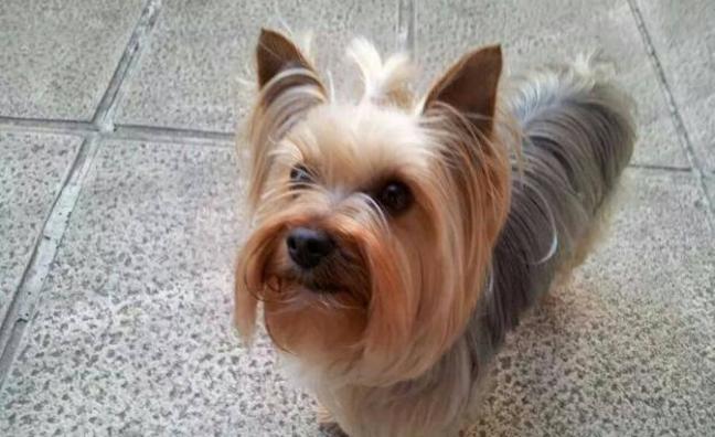 Multan a una bilbaína con 1.500 euros por llevarse una perra en Cáceres y pedir 4.000 a sus dueños para devolverla