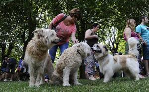 Durango acondiciona diecisiete zonas especiales para que los perros jueguen sueltos