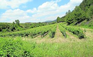 Los caminos de Santa Águeda, Gurrindo, Cascajos y Sendero, en el plan de mejora