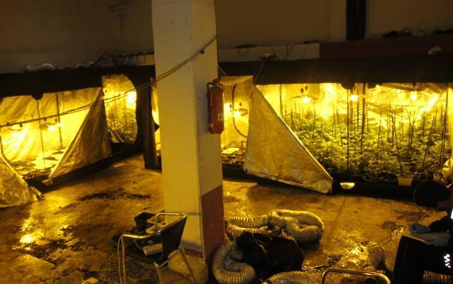 Detenido en Basauri por cultivar 412 plantas de marihuana