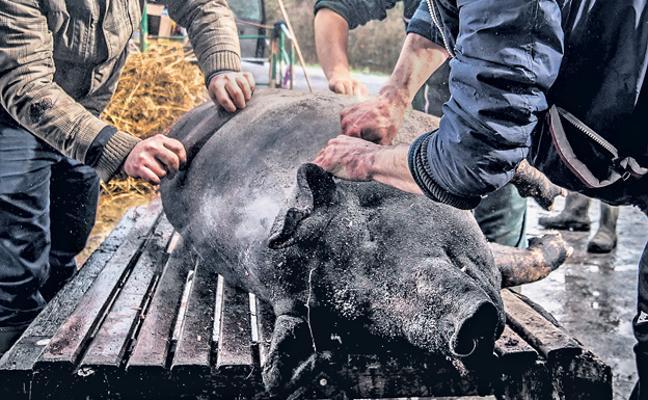 La ceremonia de la matanza del cerdo: el rito de la buena muerte