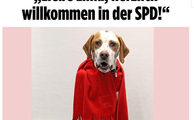 El diario 'Bild' logra inscribir una perra como militante del SPD