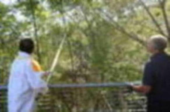 Los nidos de avispa asiática descienden un 16% en el Duranguesado el último año