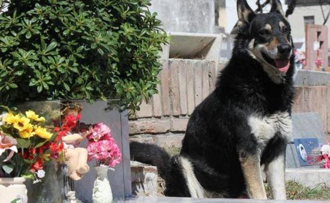 Muere Capitán, el perro que veló la tumba de su dueño durante diez años
