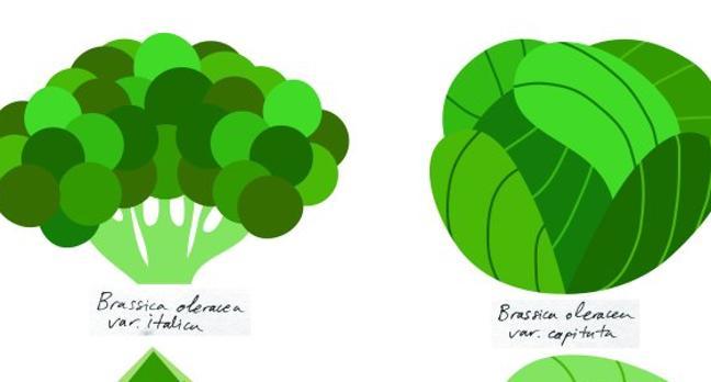 Brassica, la desconocida de muchas caras