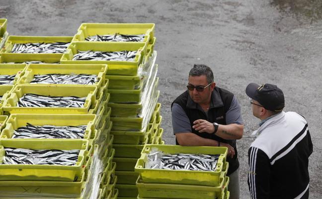 Las primeras dieciséis toneladas de anchoa, a 1,40 euros en Ondarroa