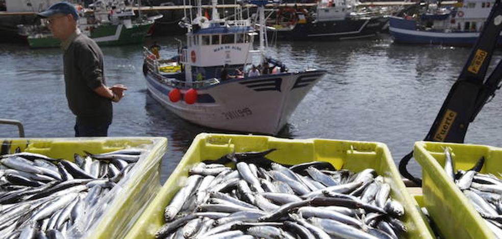 La descarga de 35 toneladas de anchoa en Ondarroa alivia la espera del verdel