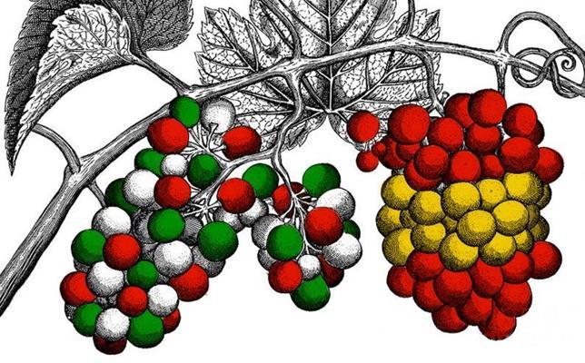 Txakoli o Rioja: las uvas de la discordia