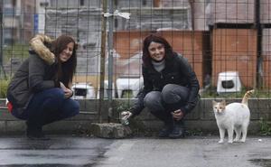 Un mercadillo recaudará fondos para las colonias felinas de Etxebarri