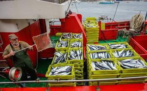 La flota de bajura descarga cerca de 580 toneladas de verdel en Bermeo y Ondarroa