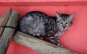 Irabazi denuncia la muerte de cuatro gatos en el Centro de Protección Animal de Vitoria