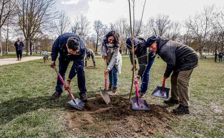 Una plantación de olmos para festejar el Día de los Bosques en Vitoria