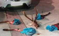 Hallan un ciervo descuartizado en un coche conducido por dos jóvenes en Huarte