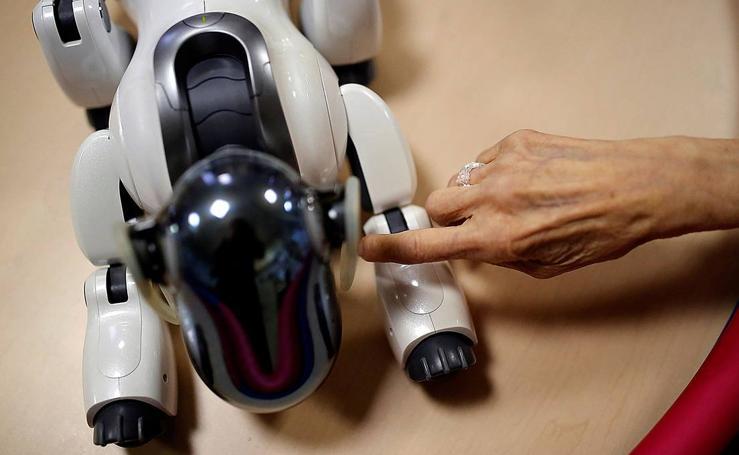 Compañero robot