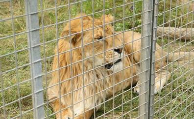 Irabazi quiere prohibir la presencia de animales del circo en la vía pública de Vitoria