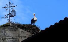 La Diputación trasladará dos nidos de cigüeña de la Sagrada Familia de Orduña ante el riesgo de caída
