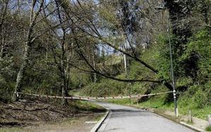 La caída de las ramas de un árbol obligan a cortar el camino de Ugasko