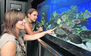 El acuario de Getxo alcanzará este verano los 300.000 visitantes