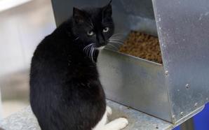 El Ayuntamiento de Basauri renueva las tolvas para alimentar a las colonias felinas