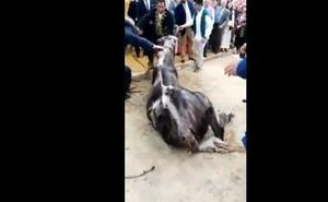 Muere un caballo en la Feria de Abril después de no comer ni beber en todo el día