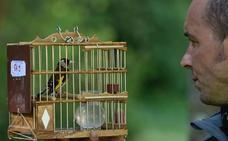Etxebarri acoge el primer concurso de pájaros cantores de la temporada