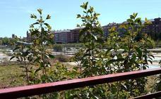 Malestar por el precario mantenimiento de los antiguos terrenos del tren desde 2015