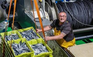 Ondarroa cierra con mil toneladas de anchoa la mejor semana de la costera