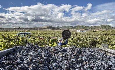 La cosecha 2017 de Rioja, calificada como 'Muy Buena'