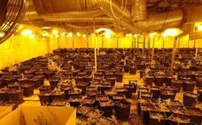 Localizan 961 plantas de marihuana en un pabellón de Júndiz