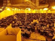 Noches en vela para evitar robos en la macroplantación de marihuana del polígono vitoriano de Júndiz