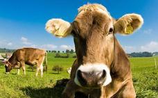 La Ertzaintza denuncia a ganaderos de Carranza por vertidos ilegales de purines