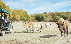 Safari por el Pleistoceno en Burgos