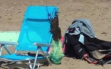 Las abejas también quieren disfrutar de un día de playa en Sopela