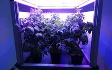 Jardines más allá de la atmósfera, el nuevo reto de la exploración espacial