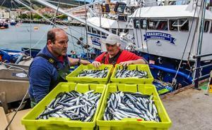 Los arrantzales bajan las cuotas y los días de pesca para alargar la costera de la anchoa