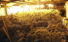 Clubs de cannabis en Bizkaia: absueltos por creer que el cultivo era legal pero condenados por robar electricidad