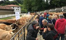 La feria de San Isidro reúne en Zeanuri al mejor ganado montesino