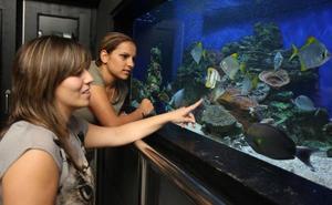 La huelga en el Getxo Aquarium amenaza con cerrar al público sus instalaciones