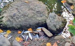 La Fiscalía de Álava sobresee de modo provisional la denuncia por la muerte masiva de peces en el Nervión