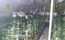 Decomisan 700 plantas de marihuana en un caserío ocupado en Arrigorriaga
