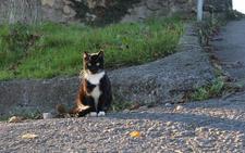Berango busca voluntarios para controlar las colonias de gatos callejeros