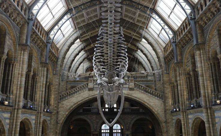La nueva joya del Museo de Historia Natural de Londres