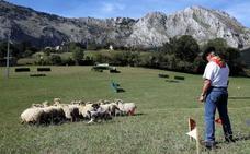 Abadiño copa la representación vizcaína en el campeonato de perros pastor vasco