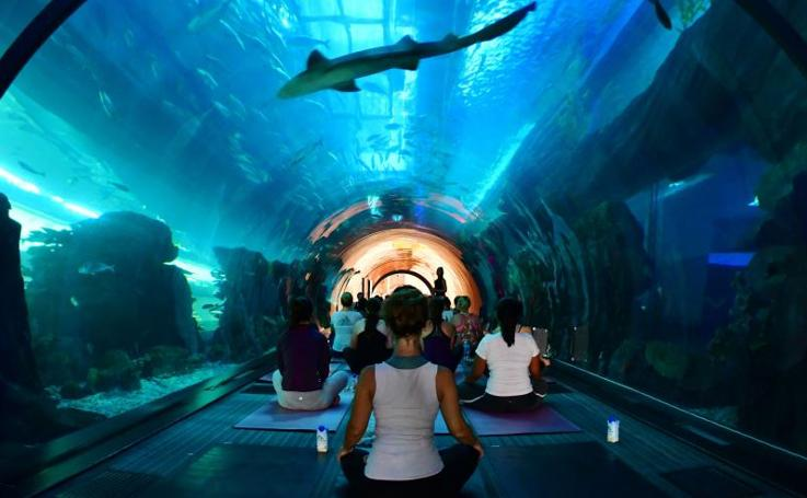 Yoga entre peces