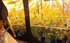 Detenido un vecino de Zalla que había convertido una casa de Cantabria en una factoría de marihuana