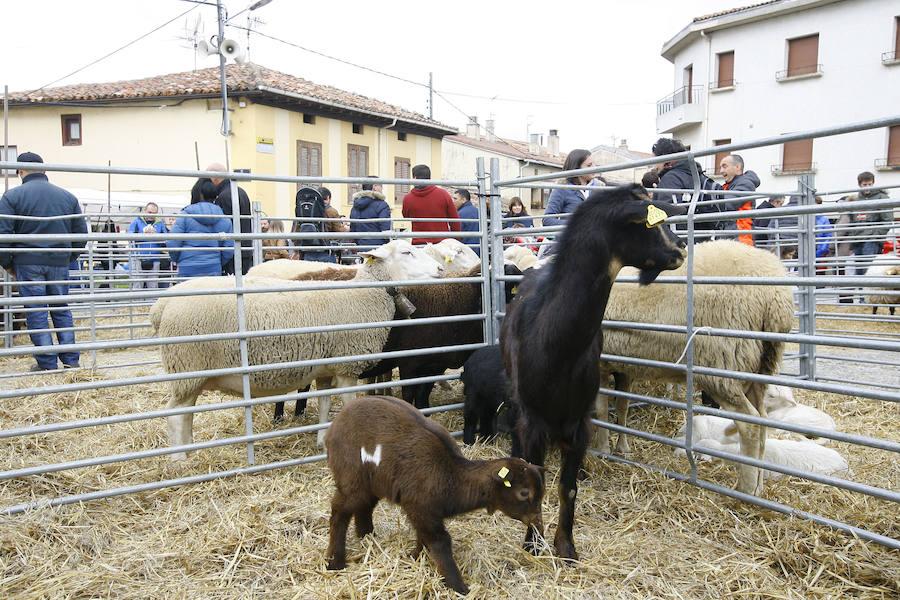 Miles de alaveses toman Campezo para hincarle el diente a la feria de San Martín
