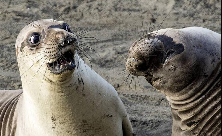 Estos animales son de chiste