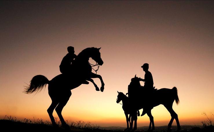 Los caballos de Fares y Mohammad