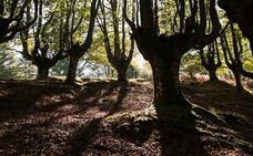 Ecologistas reclaman duplicar las hectáreas de árboles autóctonos